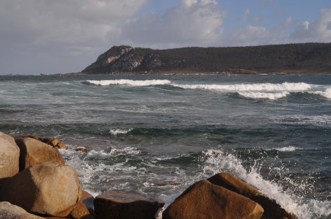 Bass Strait 2015-24-Roydon Island