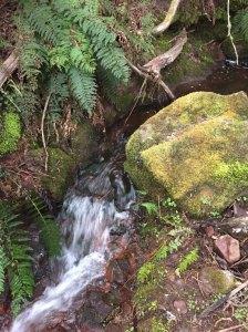 Long Hill creek above waterfall. Seasonal flow only.